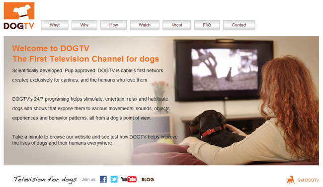 Channel for dogs